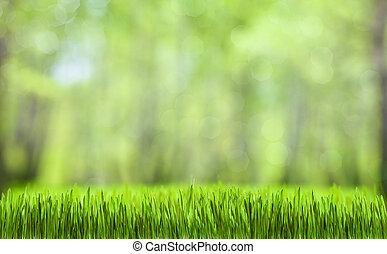 natural, primavera, abstratos, floresta verde, fundo