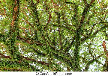 natureza, grande, árvore., verde, sob, composição