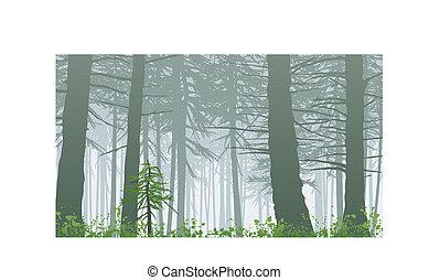 nebuloso, inspirar, maxwell, monte, cena, floresta tropical