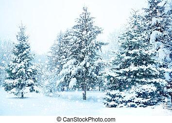 neve, árvore natal