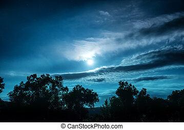 noturna, cheio, floresta, lua