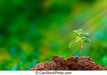 novo, hope:, árvore, seedling