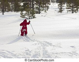 old), (4, fresco, criança, esquiando, floresta, anos, snow., novo