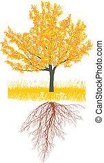 outono, árvore cereja, raizes