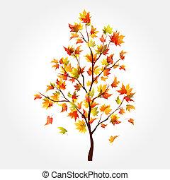 outono, árvore., maple