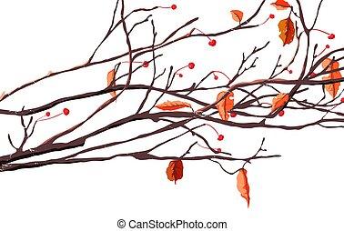 outono, estação, folhas, cerejas, ramos