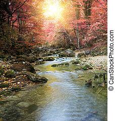 outono, rio, floresta