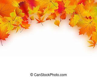 outono sai, caído, fundo