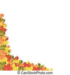 outono sai, maple