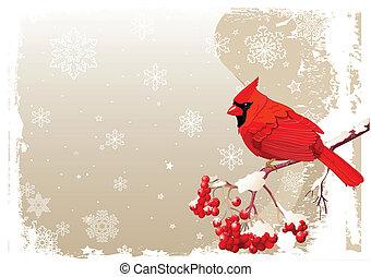 pássaro, cardeal, fundo, vermelho