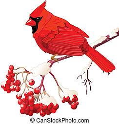 pássaro, cardeal, vermelho