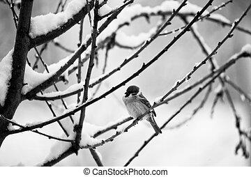 pássaro, neve