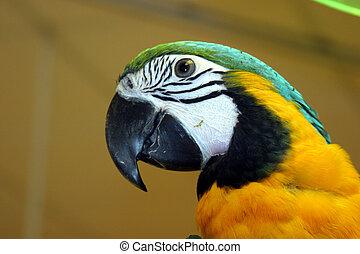 pássaros, #1