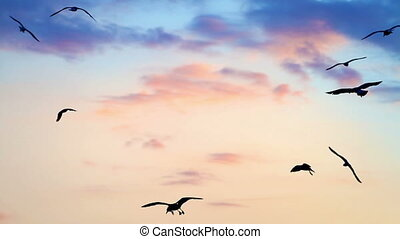 pôr do sol, pássaros