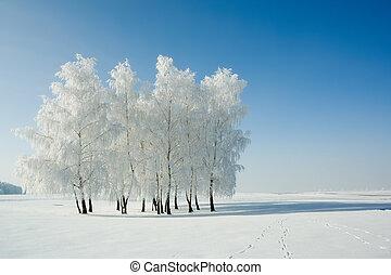 paisagem, árvores inverno
