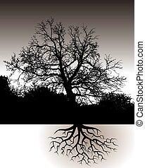 paisagem, raizes, árvore