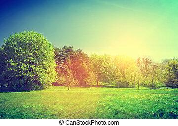 paisagem., verão, ensolarado, verde, vindima