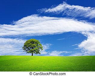 paisagem verde, natureza