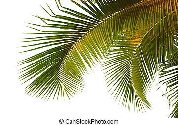 palma, coco, fronds