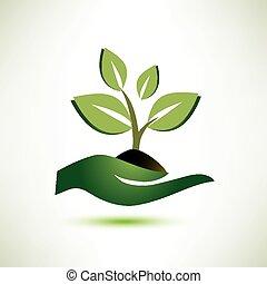 palma, planta, conceito, símbolo ecologia