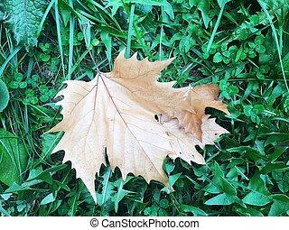park., árvore verde, sob, folha, capim, secos