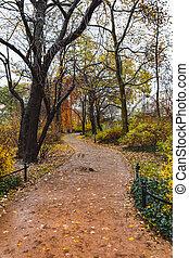 parque, outono, cidade, passeio, através