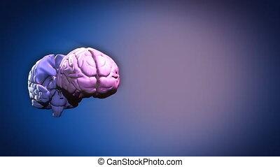 partes, cérebro, destacado