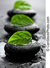 pedras, água, folhas, gotas, zen