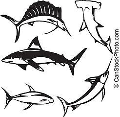 peixe, grande, oceânicos, cinco