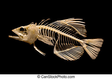 peixe, pretas, esqueleto, fundo