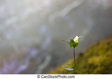 pequeno, broto, plantas, natureza