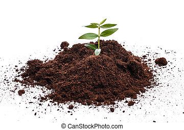 pequeno, broto, verde, solo