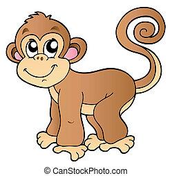 pequeno, cute, macaco