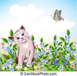 pequeno, olhos azuis, gatinho, prado