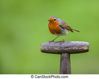 perched, punho, robin