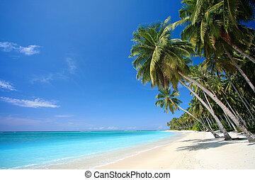 perfeitos, ilha tropical, praia, paraisos