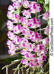 perfumado, flores, orquídea, jardim, botanica