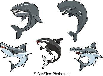 perigosa, jogo, marinho, predadores, ícone