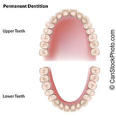 permanente, dentes, eps8