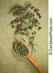 phytotherapy, dried., herbs., oregano., herbário, medicinal, medicina