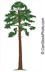 pine-tree, vetorial