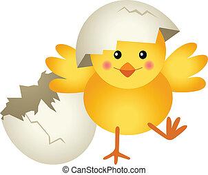 pintinho, rachado, ovo, partindo