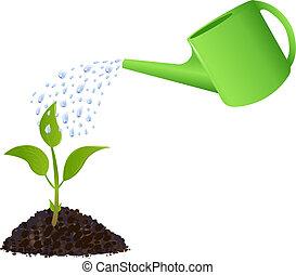 planta, aguando, verde, jovem, lata