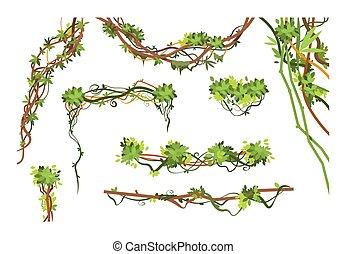 planta, branches., videira, cobrança, liana, vetorial, verde, selva, penduradas, escalando, plants., caricatura