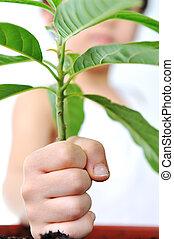 planta, conceito, isolado, mão, verde branco, criança