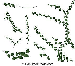 planta creeper, jogo, fundo branco