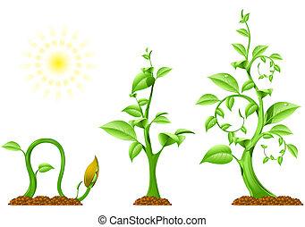 planta, crescimento