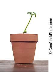 planta, espaço cópia, fundo, argila, branca, pote, jovem