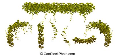 planta, folhas, verde, videiras, hera, subindo põe