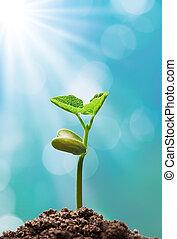 planta, luz solar